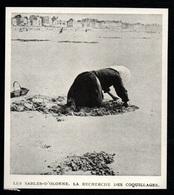 1984  --  LES SABLES D OLONNE   LA RECHERCHE DES COQUILLAGES   3Q442 - Non Classés