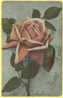 Tematica - Militari - 1917 - Fiori - Rose - Rosa Rossa - Bonne Année - 340ème Régiment D'Infanterie - Wrote But Not Sent - Militari
