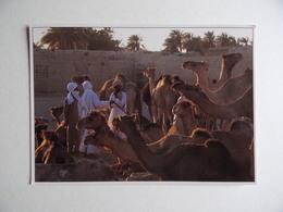 TCHAD Marché Aux CHAMEAUX FAYA-LARGEAU Photo Werner Gartung écrite De N'Djamena - Tchad