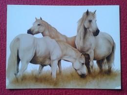 TARJETA POSTAL CARTE POSTALE POST CARD HORSE HORSES CABALLO CABALLOS CHEVAL LES CHEVAUX PFERD CAVALLO CAVALLI VER FOTO/S - Caballos