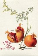 """Le Piante Della Salute """"Camomilla Romana""""-Integra E Originale 100%an2 - Plantes Médicinales"""