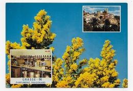 GRASSE - CITE DES FLEURS ET DES PARFUMS - LE MIMOSAS - FRAGONARD - CPSM GF VOYAGEE - Grasse