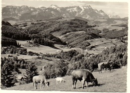 TEUFEN Landwirtschaft Stier Kühe Ziege - AR Appenzell Rhodes-Extérieures