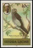 SIERRA LEONE 1980 Birds Grey Parrot 10c Imp.1983 No WMK IMPERF. - Oies