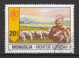 Mongolie, Mongolia, Mouton, Lamb, Sheep - Ferme