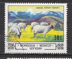 Mongolie, Mongolia, Mouton, Lamb - Ferme