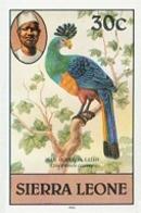 SIERRA LEONE 1980 Birds Great Blue Turaco 30c Imp.1983 No Wmk IMPERF. - Coucous, Touracos