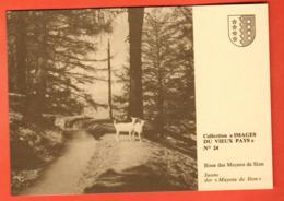 VAO-01 Images Du Vieux Pays No 24, Bisse Des Mayens De Sion,Chèvres, Suone.Grand Format Non Circ - VS Wallis