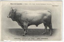 1 Cpa Concour Agricole De Paris: Prix D'honneur, E.Dallas, à Momères - France