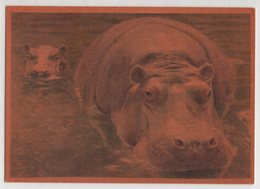 5508 Mother And Baby Hippo - Hippopotames