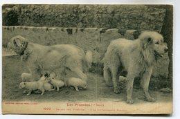 CPA - Carte Postale -  France - Les Pyrénées - Chiens Des Pyrénées  (SV6944) - Dogs