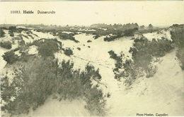 Heide , Duinen - Kalmthout