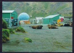 AAT, MACQUARIE , Nice Unwritten Color-card, Look Scan !!  24.6-111 - Australian Antarctic Territory (AAT)