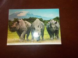 B711  Rinoceronti Viaggiata Pieghina Angolo - Rhinocéros