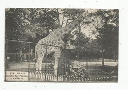 Cp, Animaux , LA GIRAFE , 75 , PARIS , Jardin Des PLANTES , Zoo , écrite 1911, Imp. Photo Mécanique - Girafes