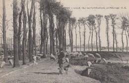 LILLE  Sur Les Fortifications,un Paturage. - Lille