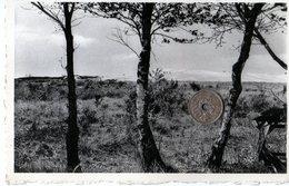 Overpelt - Envoyer à Hermée Par Oupeye - Overpelt