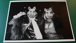CPM COCHON CHOCHONNE PIGGY DU MUPPET SHOW NEW YORK 1978 PHOTO JEAN CHRISTOPHE PIGOZZI  DEGUISEMENT - Photographs