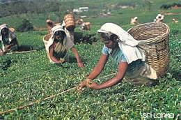 Asie SRI LANKA  Les Cueilleuses De Thé  (Tea Pluckers Métier) Nuwara Eliya  (Timbre Stamp SRI LANKA)*PRIX FIXE - Sri Lanka (Ceylon)