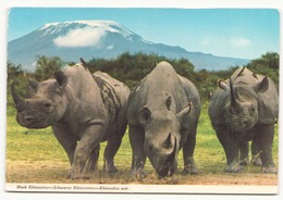 RHINOCEROS NOIR - Rhinocéros