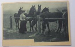Frauen, Mode, Pferde, Farm,  1900 ♥ (18935) - Pferde