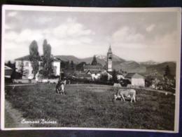 LOMBARDIA -MONZA -BRIOSCO -F.G. LOTTO N°409 - Monza
