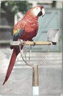 Birds, Macaw At London Zoo - Birds