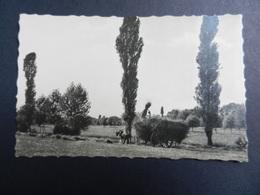 19859) CARICO FIENO SU CARRO LOCALITA' DA IDENTIFICARE NON VIAGGIATA 1915 CIRCA - Photographs