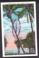 Q0632 - Climbing Cocoanut Tree HAWAIIAN ISLANDS - USA - Big Island Of Hawaii