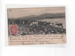 Norvège-RENHJORD-N° 1029-TROUPEAUX DE RENNES- De TROMS O Pour SENAS (Poste Restante) - Norvège