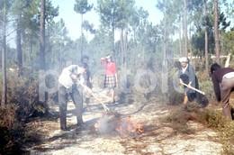 1972 FOGO PINHAL FIRE PORTUGAL AMATEUR 35mm DIAPOSITIVE SLIDE Not PHOTO No FOTO B3343 - Diapositives (slides)