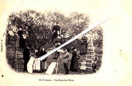 En Provence - Cueillette Des Olives - Carte Très Animée Et Circulée En 1908 - Artisanat