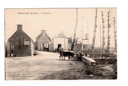 CPA 50 - Blainville ( Manche ) - L'arrivée , Vaches - Blainville Sur Mer