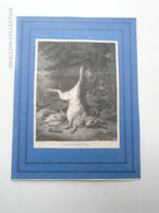 ZA168.12 Jan B. Weenix -  Hunting --Hare -Birds - S.v. Perger Del. THIERSTÜCK -J.Scott Sc. - Ca 1820 - Engraving Gravure - Estampes & Gravures