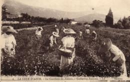 06 - Alpes Maritimes - La Cote D'Azur - La Cueillette Du Jasmin - C 3580 - Autres Communes