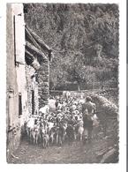 D 31   FOS  Le Berger Et Son Troupeau De Chevres - France