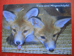 Gut Aiderbichl,Berg 20.Henndorf Am Wallersee.Fox - Animaux & Faune