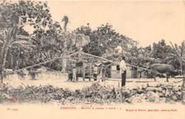 Haïti - Ethnic / 30 - Abricots - Moulin à Cannes à Sucre - Haiti