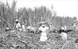 Haïti - Ethnic / 31 - Sugar Canes - Haïti