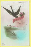 * Oostende - Ostende (Kust - Littoral) * (Dédé Paris 539 Bis) Souvenir D'Ostende, Fantaisie, Rose, Zwaluw, Hirondelle - Oostende