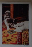 Petit Calendrier De Poche 1961 Chat Chaton Pithiviers - Calendriers
