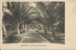 Banaba  -  Avenue Des Cocotiers  (scan Verso) - Autres