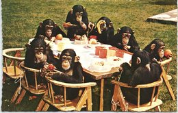 Animal Postcard Chimps Tea Party - Monkeys