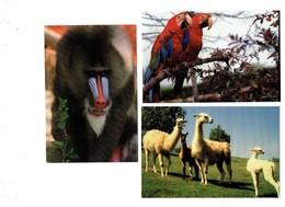 Lot 3 Cpm - 42 - RIVE DE GIER - Parc Zoologique Zoo De St Martin La Plaine - Lama Ara Chloroptère Mandrill - Monkeys