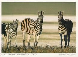 Namibia - Zebra In Etosha National Park - Namibie