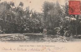 *** MAURITUS  ***  îles Maurice - Bassin De Mon Plaisir Jardin Des Pamplemousses - TTB - Maurice