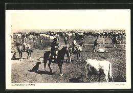 AK Argentina, Marcando Ganado, Gauchos Mit Herde - Ethnics