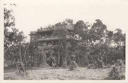 Kenya Nyeri Treetops - Kenya