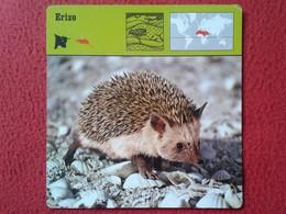ESPAGNE SPAIN FICHA SHEET FICHE ERIZO HÉRISSON HEDGEHOG IGEL VER FOTO/S Y DESCRIPCIÓN ANIMALES ANIMAL IDEAL COLECCIÓN - Animales