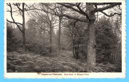 Oignies-en-Thiérache (Viroinval)-1957-Sous-Bois à Risque-Tout-Edit.Maison Petit-Leclercq, Oignies - Viroinval